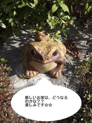 frog1.JPGのサムネール画像